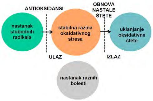 u. i. frolov hipertenzije)