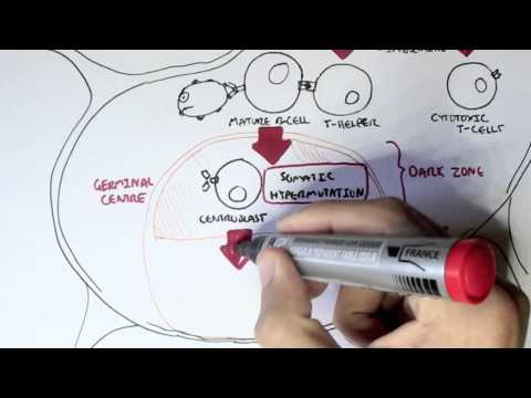 hipertenzija magnitogorsk ayurvedski lijekovi hipertenzija