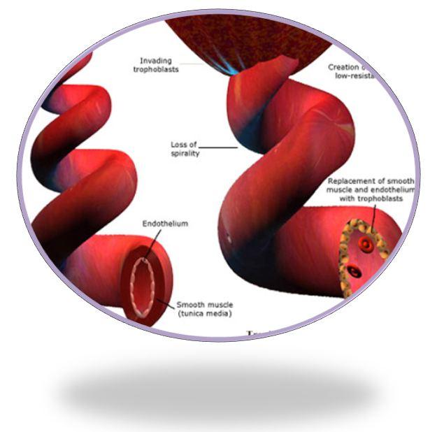 liječenje hipertenzije poslijeporođajne)