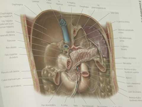 Kronični pankreatitis - PLIVAzdravlje