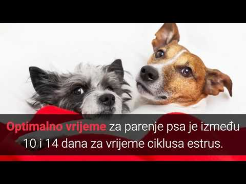 liječenje hipertenzija u pasa simptoma hipertenzija kako zakosit