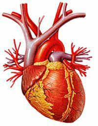 hipertenzija 2. stupanj. 3. rizik