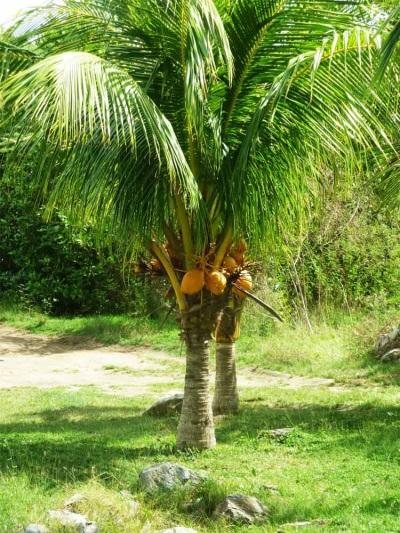 liječenje hipertenzije palmi)