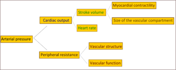 hipertenzija značenje