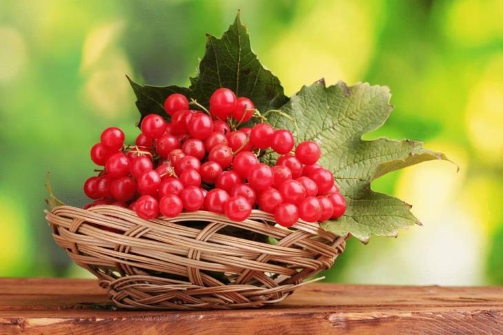 Sjeme kopra - korisna svojstva i primjena. Kako skuhati sjemenke kopra
