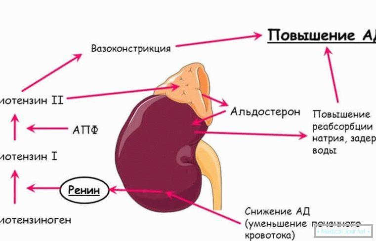 Inhibitori angiotenzin konvertirajućeg enzima(ACE inhibitori) u liječenju hipertenzije