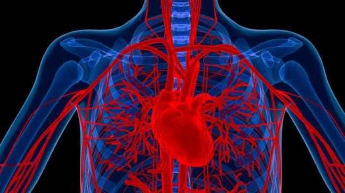 hipertenzija može biti u mogućnosti piti konjak)