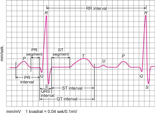 hipertrofija lijeve klijetke i hipertenzije)