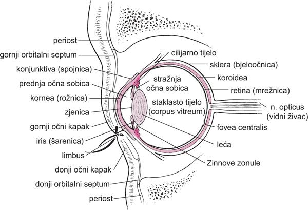 mrežnice oka hipertenzija od ojačane posude hipertenzije