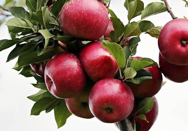 Lipidi hipertenzije ,zelene jabuke za hipertenziju