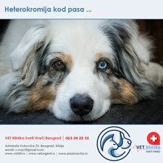 maligna hipertenzija je ono što je)