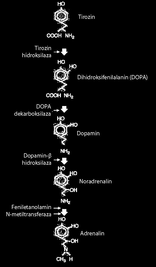 Hipertenzija na pozadini hormona