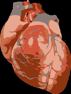 kapilare i hipertenzija