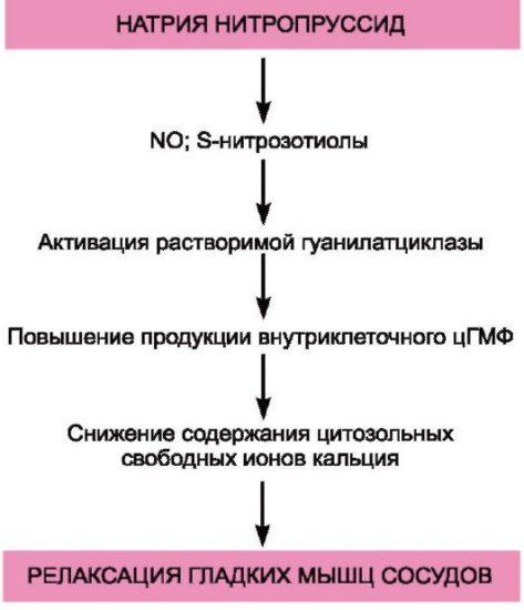 liječenje hipertenzije u muškoj shemi