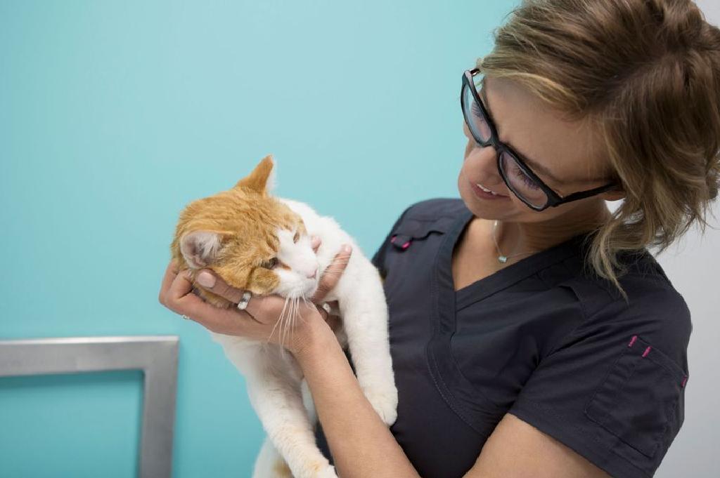mačke liječenje hipertenzije migrena ili hipertenzije