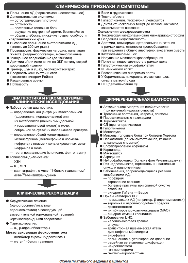 patogenezi hipertenzije u feokromocitoma)